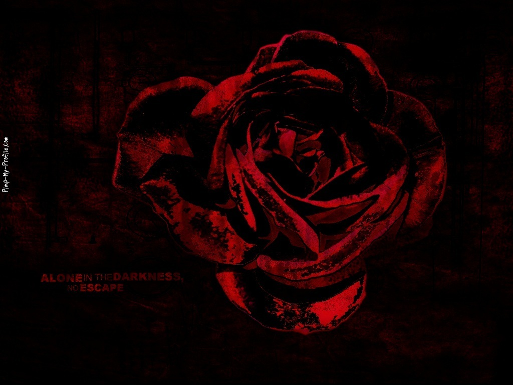 Blood Rose Wallpaper | galleryhip.com - The Hippest Galleries!